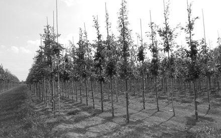 over-ons-bomen